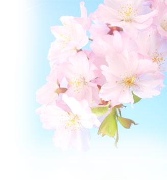 tsuri sushi kwitnąca wiśnia pruszków